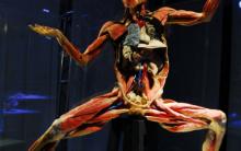 Exposições de Anatomia – Corpo Humano, Fotos e Técnicas de Conservação