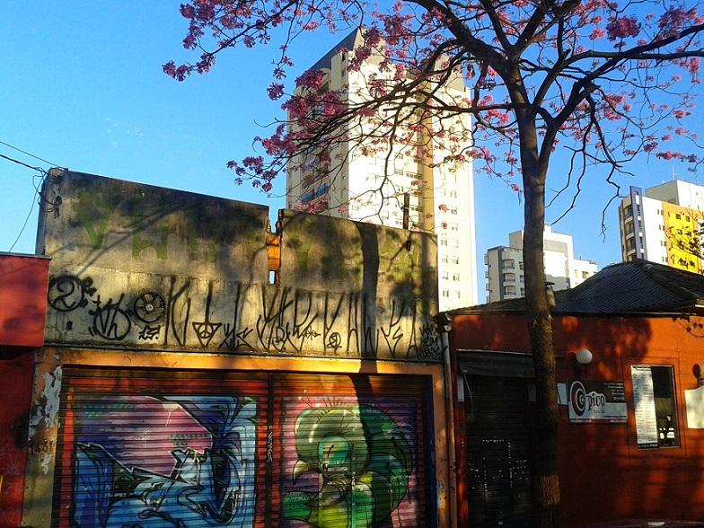 Minha fotografia preferida porque mescla a natureza (árvore e luminosidade do fim da tarde) mais a obra urbana dos grafites e pinturas