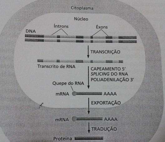 Resumo do Splicing do RNA em Células Eucariontes (Figura do Livro Biologia Molecular da Célular)