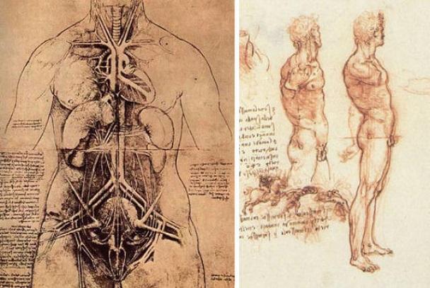 Estudos Anatômicos da Cavidade Abdominal e Pelve