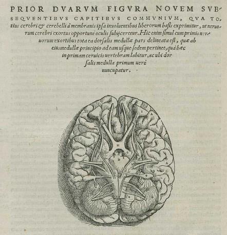 vesalius-pares-cranianos