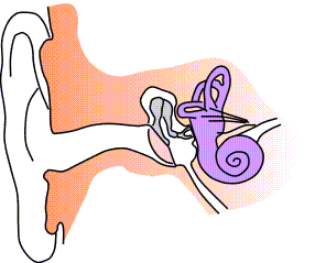 Ear-anatomy-notext-small