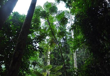 mayombe-floresta